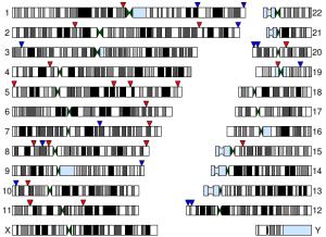 Gene conversions plot on genome